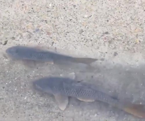 Fish swim through flooded road in Texas