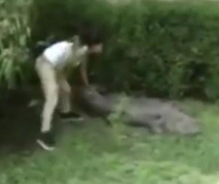 Woman climbs into Mexican zoo enclosure, pokes crocodile