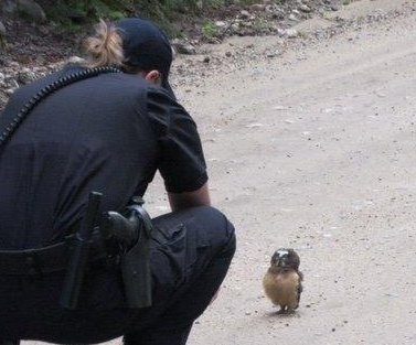 Colorado sheriff's deputies 'meet their feathery match'