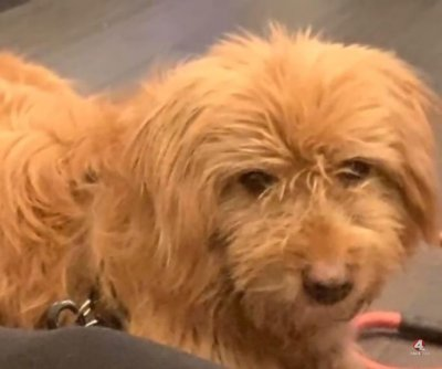 Escaped dog traveled 65 miles before being caught