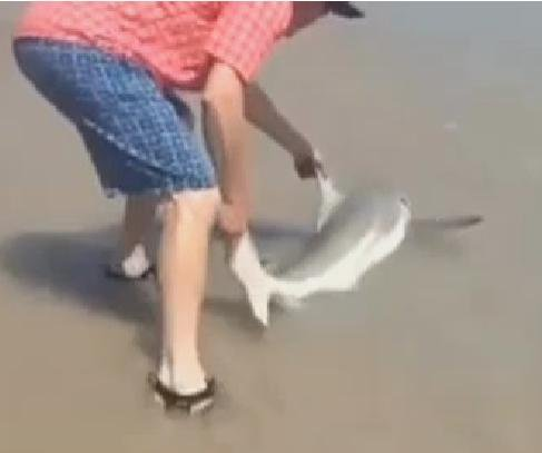 Man helps shark return to ocean at North Carolina beach