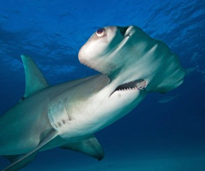 Study: Angler education can help protect sharks