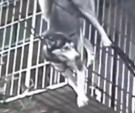 Dog evades injury in building fall by landing on cables