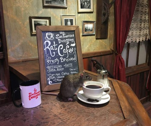 San Francisco Rat Cafe offers dining with domesticated vermin