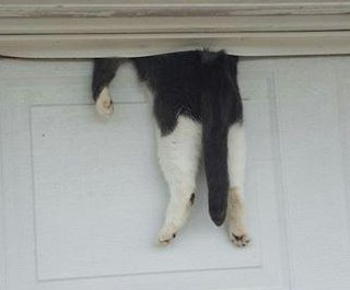 Cat pinned at top of closed garage door rescued without injury in Louisiana