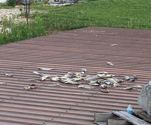 Piles of dead fish repeatedly turn up on trail along Wisconsin river