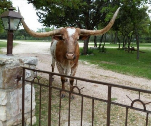 Texas mascot to miss Oklahoma game due to life threatening illness