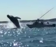 Humpback drenches whale watchers in boat off Virginia