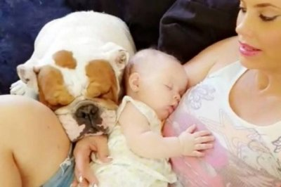 Coco Austin mourns death of dog Spartacus: 'He was my 1st baby'