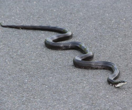 Endangered snake spotted on community college campus