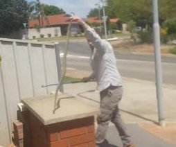 Trapper removes deadly snake from suburbanite's mailbox