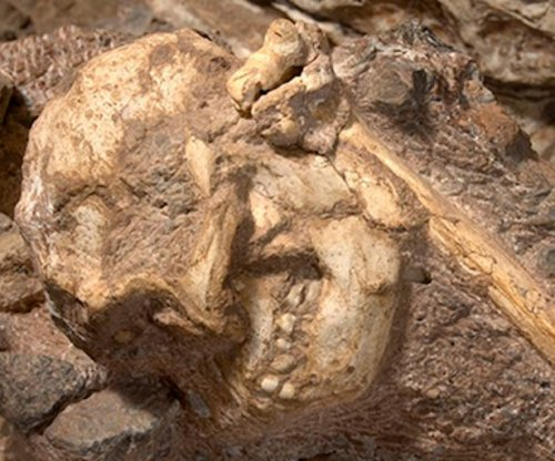 Paleontologists reveal Little Foot, the most complete remains of an early human relative