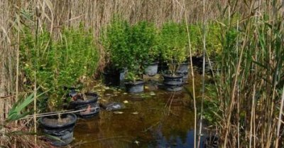 Secret pot garden found floating on Hungarian lake