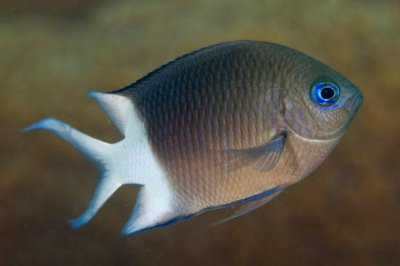 For reef fish, tolerance for warming waters comes from their parents' DNA