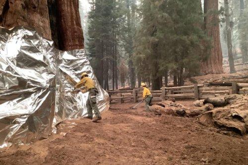 Crews continue to battle blaze in California's Sequoia National Park