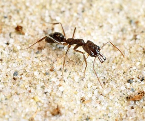 Trap-jaw ants use spring-loaded jaws to jump from predators