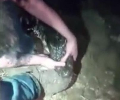 Florida man struggles with alligator latched onto his boot