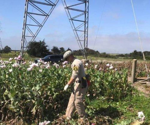 California police find poppy field in suburban town