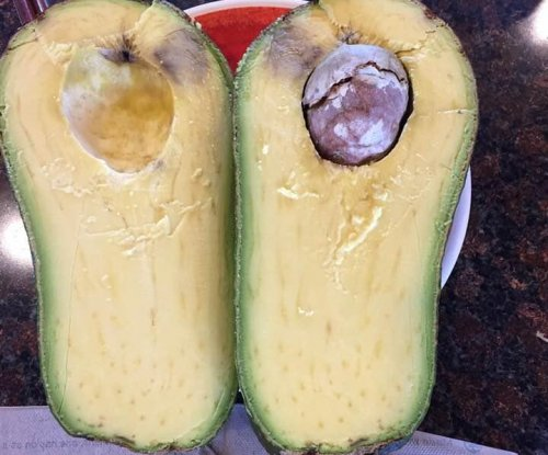 Hawaii woman's 5-pound avocado named world's heaviest