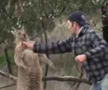 Man punches kangaroo to save dog from headlock in Australian outback
