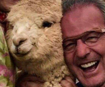 California man's 'meltdown over alpacas' in Peru goes viral