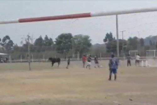 Escaped bull interrupts soccer game in Argentina