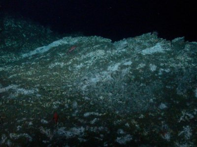 Methane-munching microbes found in rocks at bottom of the sea