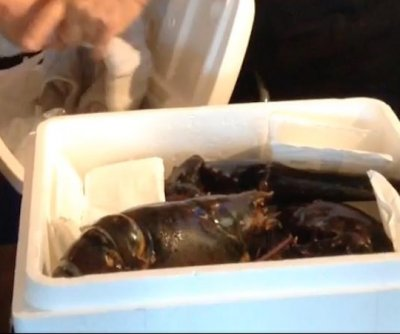110-year-old, 15-pound lobster rescued from Florida restaurant