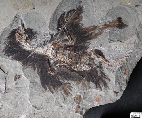 130 million-year-old bird fossil yields keratin, melanosomes