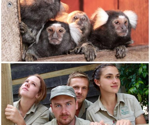 Zookeepers recreate animal poses in viral photos