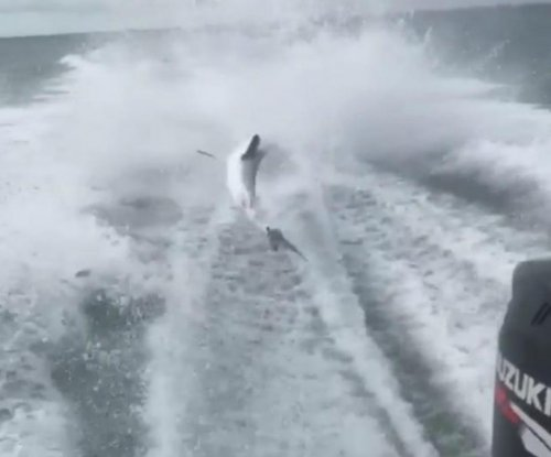 Angry Internet users ID men in shark-dragging video; one seeks police protection