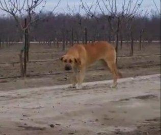 Viral Facebook post blasts owner of abandoned dog