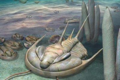 Giant trilobite fossil found on Australia's Kangaroo Island