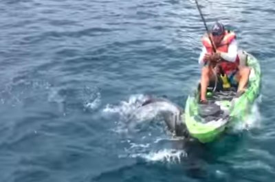 Florida man's kayak capsizes while trying to catch a shark