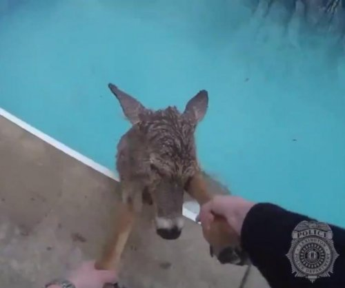 Police officer rescues deer from Kentucky swimming pool