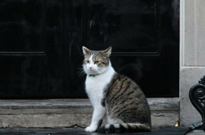Rat-catching cat to remain in U.K. government building after prime minister change