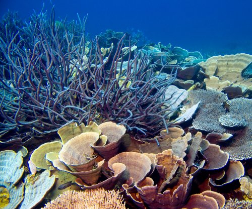 Australia's Great Barrier Reef valued at $42B, report says