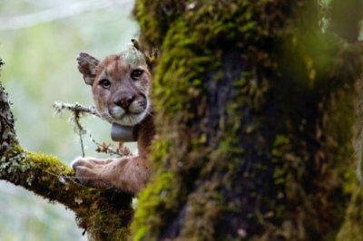 Fear of humans influences behavior of predators, rodents