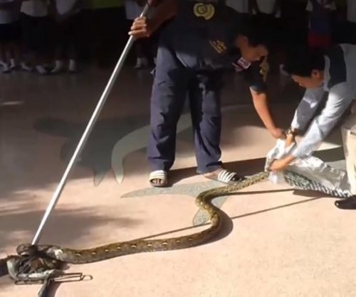 Students find 12-foot python lurking in school bathroom