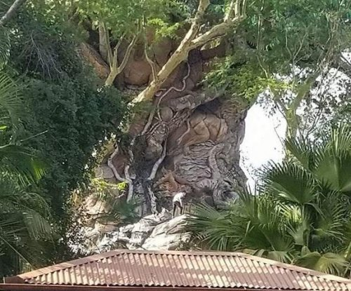 Four men busted trying to climb Disney World's Tree of Life