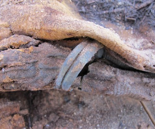More than a million mummies found in ancient Roman cemetery