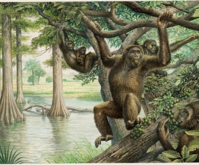 Ape-like pelvis found in Hungary could change the story of human evolution