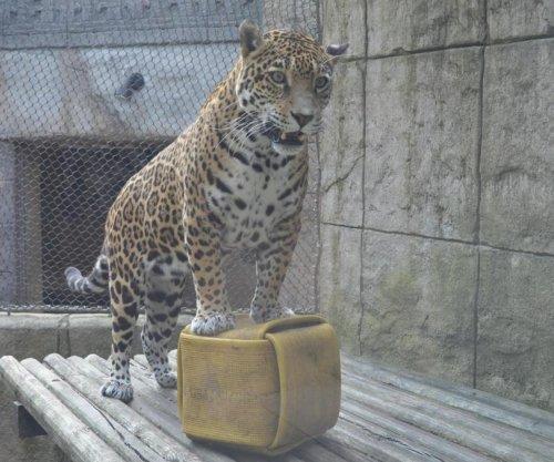 Ohio zoo's drill sparks jaguar escape rumors