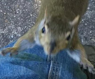 Curiously bold squirrel climbs man's leg in New Orleans