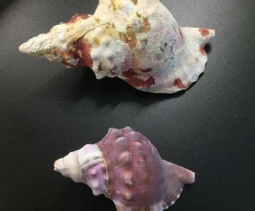 Sea snail shells are dissolving as the ocean gets more acidic