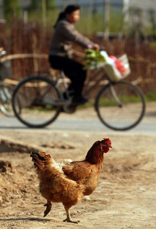 Oregon police deal with report of chicken crossing the road
