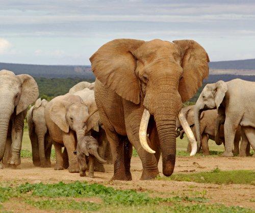 Botswana lifts five-year ban on elephant hunting