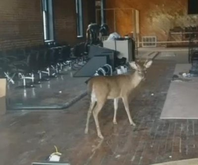 Deer gets trapped in downtown building in Alabama town