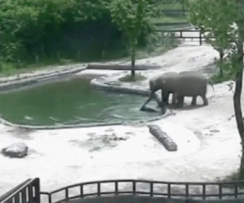 Pair of adult elephants rescue calf from drowning in pool