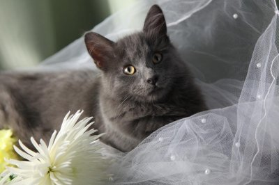 California man marrying his cat to raise money for animal shelter